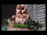 Animatronic Tawny Owl